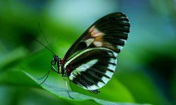 butterfly-44882_1920